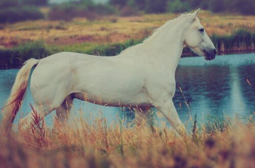 paardenmelk voor psoriasis